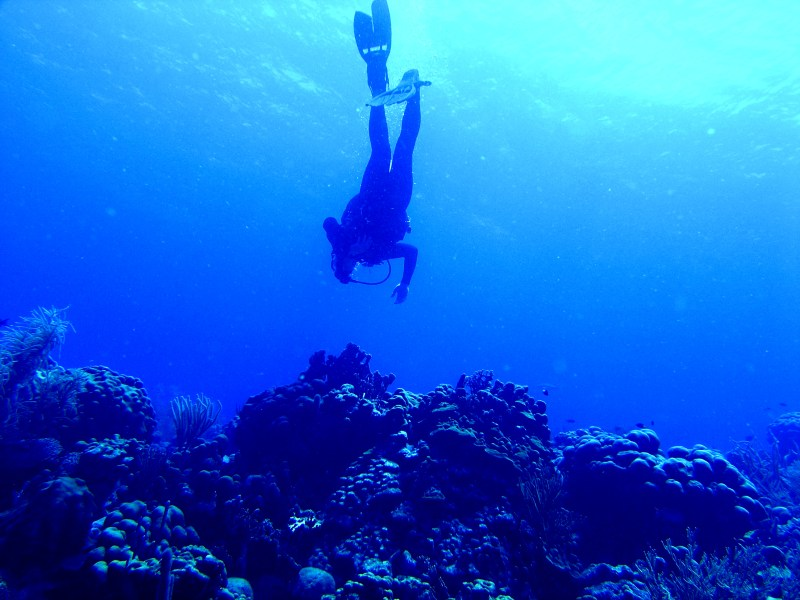 On the Reef