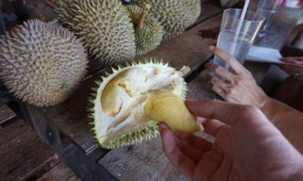 The Best Durians In the World