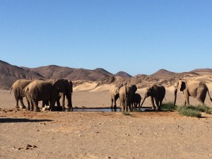 Desert elephants waterhole