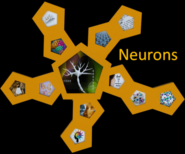 Neurons Section