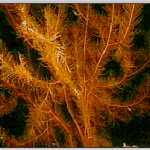 Branching Fibers