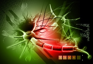 Two Neurons