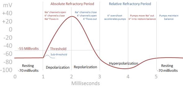 Action Potentials Classic Curve