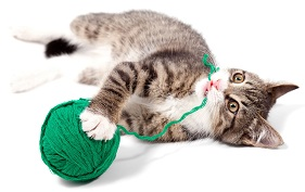 Cat and String