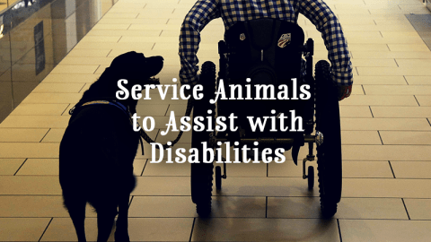 Service Animals to assist those with disabilites