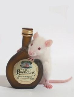 baby white rat