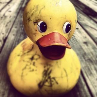 rubber-duck-594356_1280