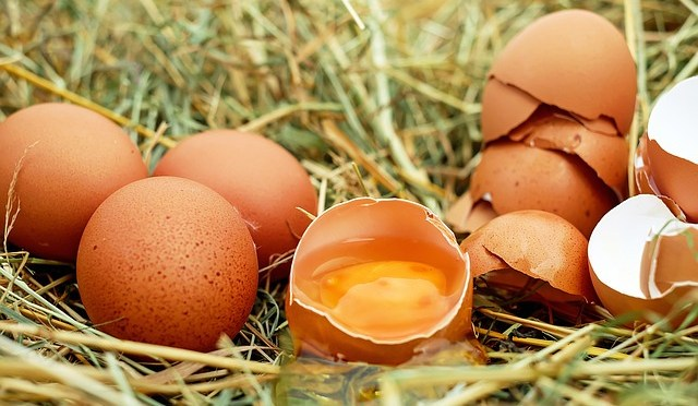 Can I Feed My Rat Chicken Eggs? Are They Safe?