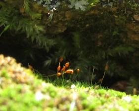 moss between rocks