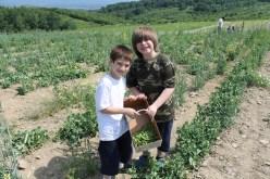 Boys2_Lawrence Farms