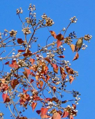 pebble-hill-plantation-birds