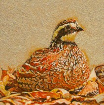 Upland_Gold_bobwhite quail painting by_Wes_Siegrist