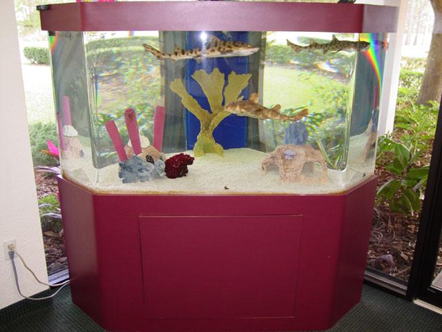 Under The Wave  Complete Aquatic Services  Aquarium
