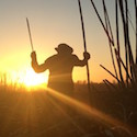 A sugar cane cutter works with the sun behind him.