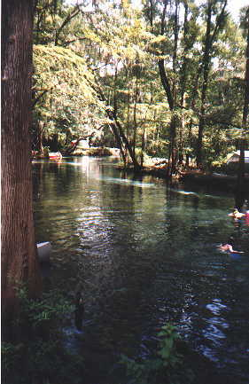 Ginnie Springs  Scuba Cave Diving and Snorkeling Ginnie