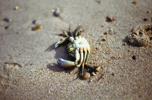 Decomposers Indian Ocean
