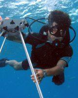 Elkhorn_Coral Disease Survey James_W_Porter Portrait 8