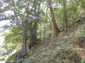 Tobago rainforest