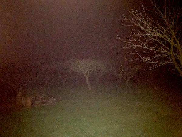 Rick Trees Nightime