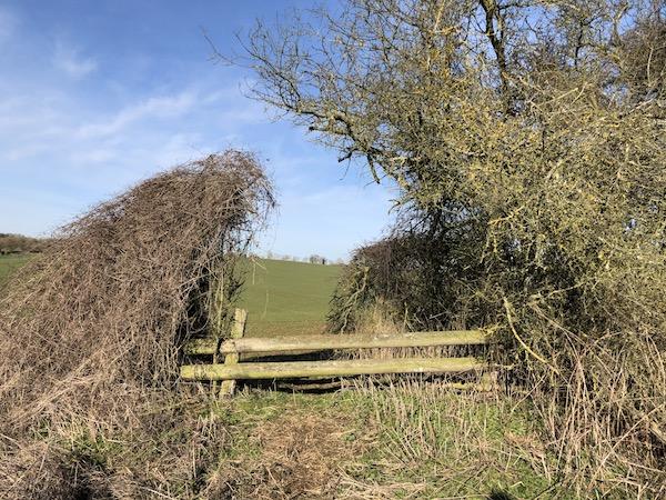 Fence hedge