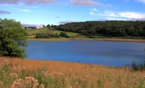 Sylvia Crowe. Reserva Wimbleball, Somerset