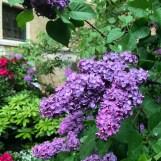 Centralbadet Park Lilacs