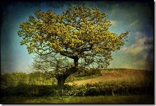 arbre, pâturage