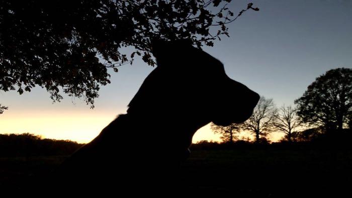 silhouette de chien en contre jour sur fonds de coucher de soleil