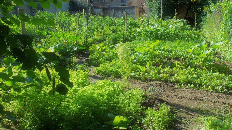 ancien jardin potager