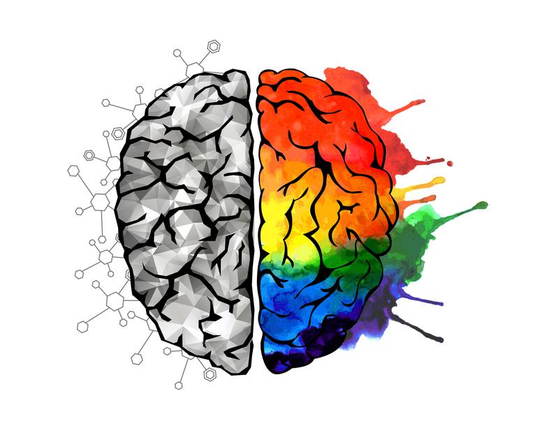 multi-potentialiste, cerveau gauche,