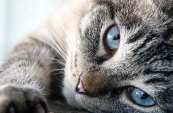 cat-3062647_1920