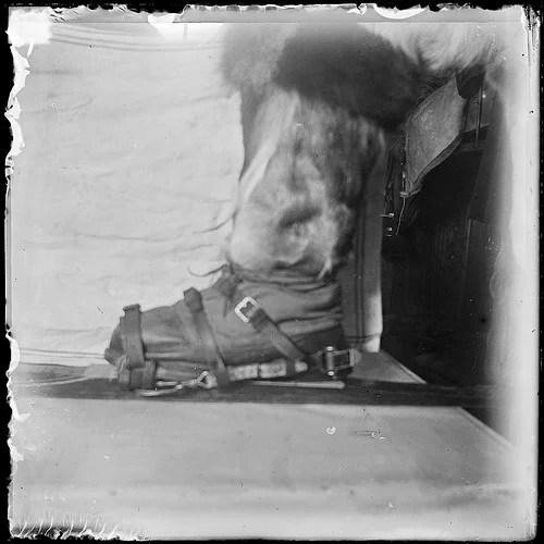 ski 1911 photo