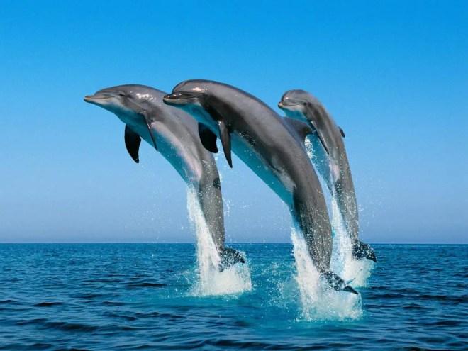 colonie de dauphins échoués le 18 février