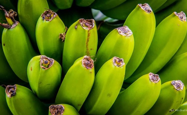 United Fruit Company photo