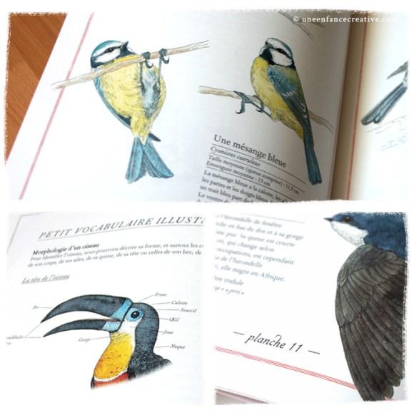 Extraits du livre Inventaire illustré des oiseaux