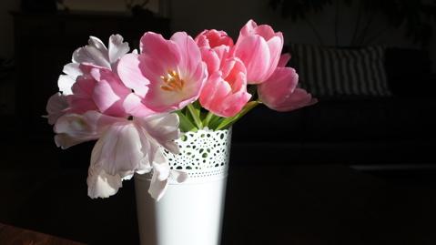 tulipes-floresie