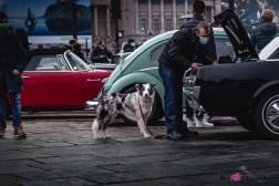 Photo Traversée de Paris hivernale 2021 ambiance chien