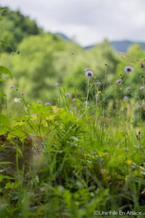 Sortie Ecotourisme en Alsace : les Steinesala dans la Vallée des Géants