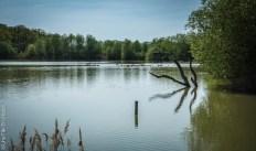 Etang au Parc de Sainte Croix - Photo Céline Schnell Une Fille En Alsace