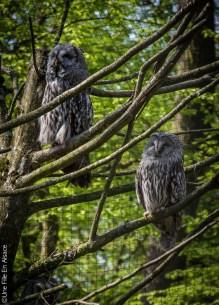 Chouette au Parc de Sainte Croix - Photo Céline Schnell Une Fille En Alsace