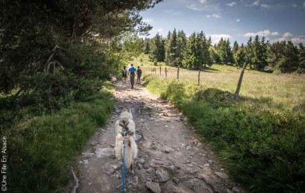 Cani-Rando La Petite Finlande Vallée de Kaysersberg - Crédit Photo Céline Schnell Une Fille En Alsace