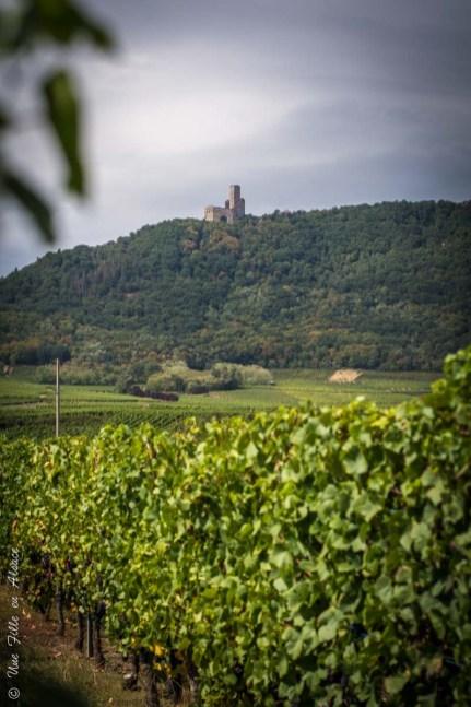 L'Ortenbourg à Scherwiller - Photo Céline Schnell Une Fille En Alsace
