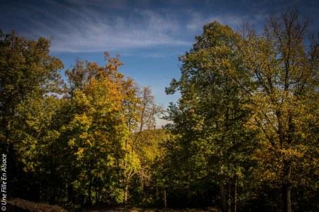 randonnee-chateau-spesbourg-andlau©Celine-Schnell-Une-Fille-En-Alsace-12