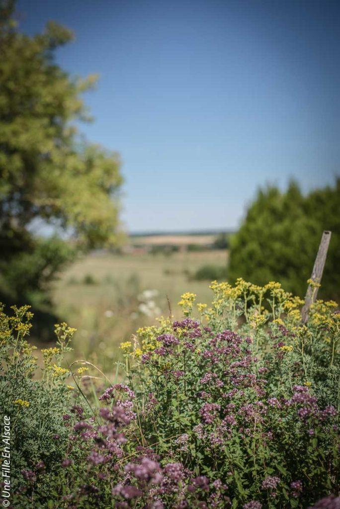 sortie-ecotourisme-la-villa-dehlingen©Celine-Schnell-Une-Fille-En-Alsace-2019-13