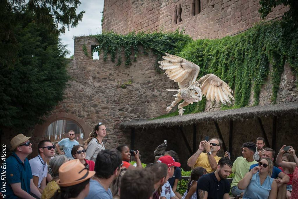 volerie-des-aigles-kintzheim©Celine-Schnell-Une-Fille-En-Alsace-2019