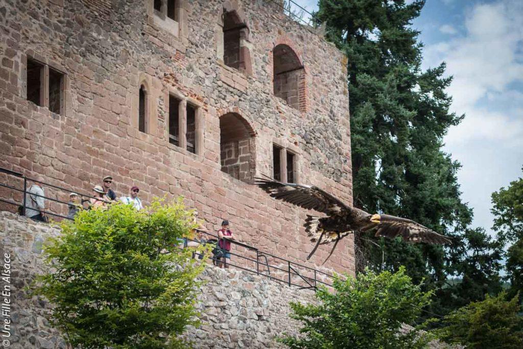 volerie-des-aigles-kintzheim©Celine-Schnell-Une-Fille-En-Alsace-2019-2