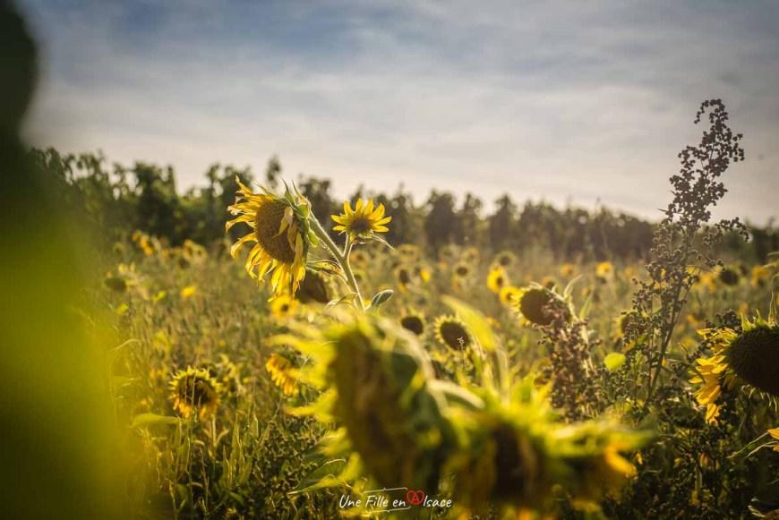 veloroute-vignoble-itterswiller©Celine-Schnell-Une-Fille-En-Alsace-2019
