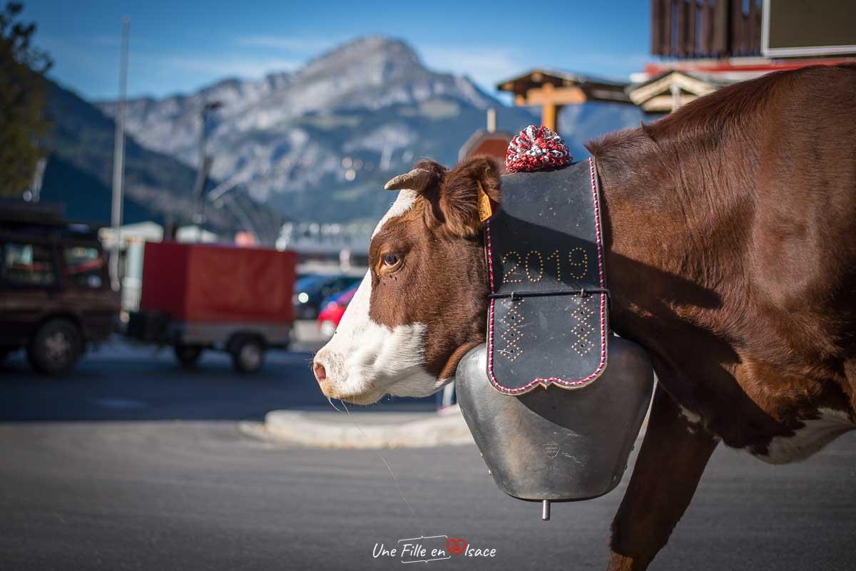 Transhumance -Haute-Savoie©Celine-Schnell-Une-Fille-En-Alsace-2019