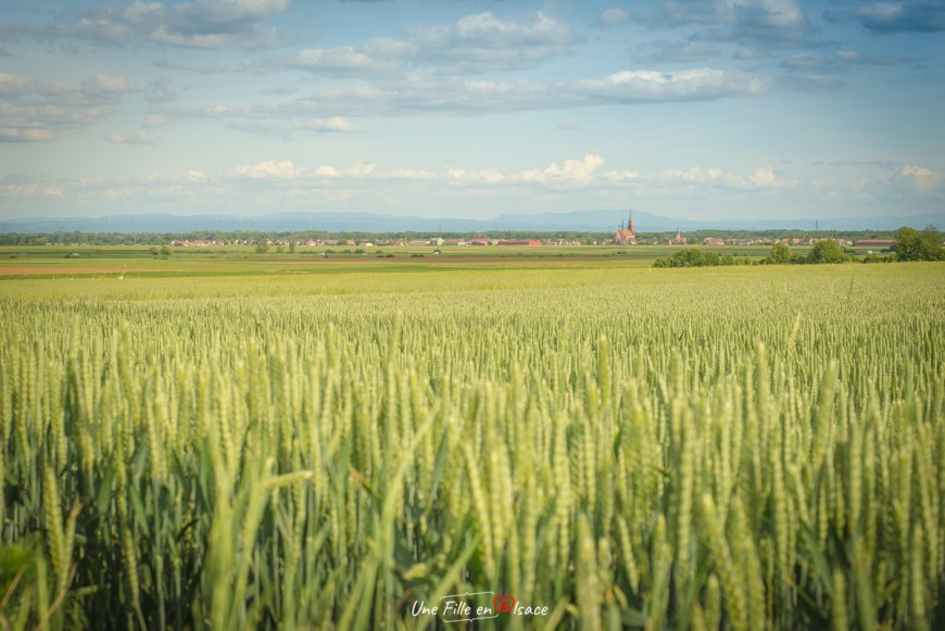 velo-pays-de-sainte-odile-meistratzheim@Céline-Schnell-Une-Fille-En-Alsace-2020