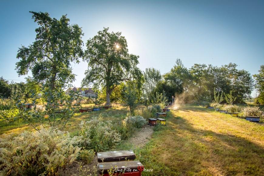 Ruchers des Vosges du Nord à Struth en Alsace